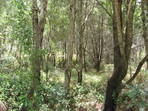 29-33 Nunkeri Drive Macleay Island, QLD 4184