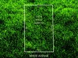 40 White Avenue Lockleys, SA 5032