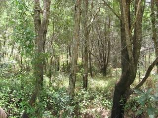29-33 Nunkeri Drive Macleay Island , QLD, 4184